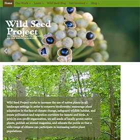 Wild Seed Project: Returning Native Plants to the Maine Landscape
